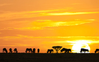 Safari Excursions via Private Jet Charter, Serengeti vacation, african charter flight